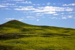 Rullande gröna kullar på Custer State Park i South Dakota arkivbilder