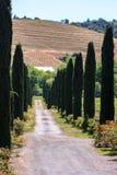 Rullande hils av Kalifornien vingårdar arkivbild