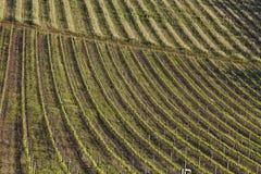 Rullande vingårdar av en vinlantgård i Sydafrika arkivfoto