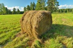 Rulle i höet i fältet Fotografering för Bildbyråer