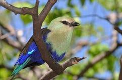 Rullo gonfiato blu Fotografia Stock Libera da Diritti