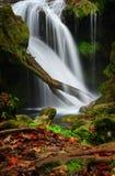 Rumänien parkerar den härliga landskapvattenfallet i skogen och naturliga Cheile naturliga Nerei Arkivfoto