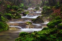 Rumänien parkerar den härliga landskapvattenfallet i skogen och naturliga Cheile naturliga Nerei Royaltyfria Foton