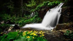 Rumänien parkerar den härliga landskapvattenfallet i skogen och naturliga Cheile naturliga Nerei Royaltyfria Bilder