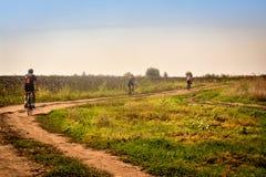 In Rumänien, in Richtung zu Donau-Ufer, durch ein Sonnenblumengetreidefeld radfahren stockbild
