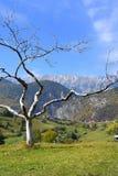 Rumänien Transylvania berg fotografering för bildbyråer