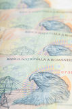Rumänischer Geldstapel Stockfotos