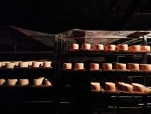 Rumänischer Käse nasal auf Metallregalen in der Grotte lizenzfreies stockfoto