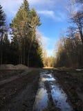 Rumänischer Wald lizenzfreie stockfotografie