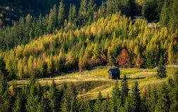 Rumänisches Dorf auf Landschaft mit altem hölzernem Haus und Kiefernwald stockbild