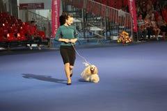Rumänsk hundShow 2012 Arkivfoto