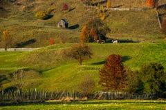 Rumänsk by på bygd med det gamla wood huset och djur på lantgården arkivfoto