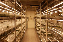 Rum för kultur för växtsilkespapper Arkivbild