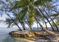 Rum Point Shady Spot Stock Images