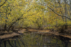 Rum river backwater, autumn Royalty Free Stock Photos