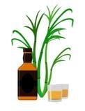 Rum set. Alcohol drink, glasses, shots, rum bottle, sugar cane. Royalty Free Stock Photo