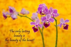 Rumi - Orchidee auf Gelb Lizenzfreies Stockbild