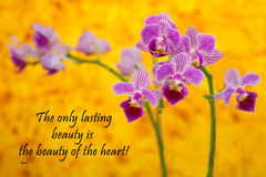 Rumi - orkidé på guling Royaltyfri Bild