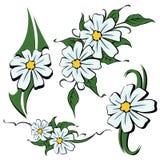 rumianków kwiaty ilustracji
