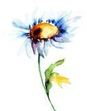 Rumianków kwiaty Obrazy Stock