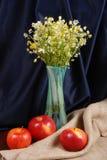 rumianków szkła waza Zdjęcie Stock