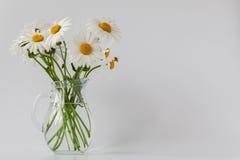 Rumianki w wazie Fotografia Stock