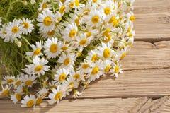 Rumianku kwiat Obraz Royalty Free