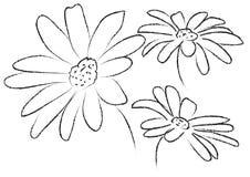Rumianku kwiatu grafiki linii tło Zdjęcia Stock