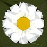 Rumianku poligonalny kalejdoskop, konceptualny matematyka wzór Zdjęcia Stock