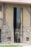 In the room-Giraffa camelopardalis. It is a ruminant cloven hoofed animal in the genus Cervus of giraffe. They are the highest living terrestrial animals in the Stock Photo