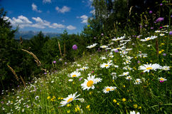 Rumänien härligt landskap Royaltyfri Foto