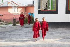 Rumtek修道院的,锡金,印度年轻修士 库存图片