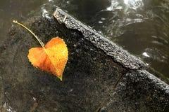 Run-aground heart