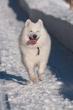 Run, doggy, run! Royalty Free Stock Image