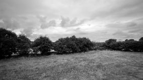 Run in a meadow with wild grass and flowers, then take off over a nice countryside showing plots, trees, hedgerows and soft hills. Full HD black and white long stock video footage