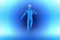 Run men x-ray anatomy. 3d image run men x-ray anatomy vector illustration
