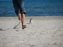 Run puppy run!. My little puppy on the Dollymount  beach in Dublin Stock Photography