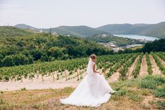 A runaway bride walks in a deserted field, admires vineyards and mountains, and feels free. A young girl retired in. Nature Royalty Free Stock Photo