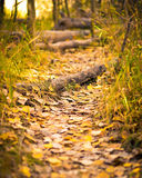 Runaway. Trail in the woods Royalty Free Stock Images