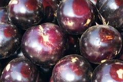 Rund aubergine Arkivbild
