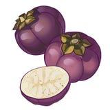 Rund aubergine för vektor vektor illustrationer