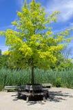 Rund bänk under ett träd Royaltyfri Fotografi