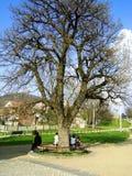 Rund bänk under träd Arkivbild