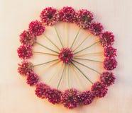 Rund blom- modell av lösa blommor av Allium till rosa retro bakgrund Royaltyfri Bild