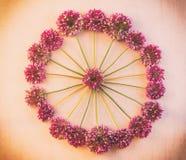 Rund blom- modell av lösa blommor av Allium till rosa retro bakgrund med karaktärsteckning Royaltyfria Bilder