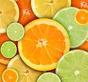 rund färgrik frukt för bakgrundscitrius Royaltyfri Bild