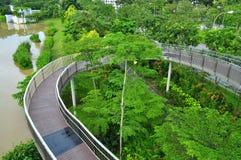 Rund gångbana runt om Yishun Reservoir Arkivfoton