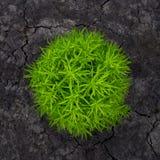 Rund grön buske Royaltyfria Foton