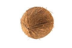 Rund kokosnötfrukt Arkivbilder