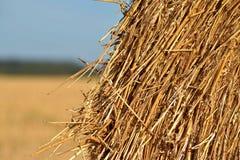 Rund packe av sugrör Fältet skördas Sun är glänsande Royaltyfria Bilder